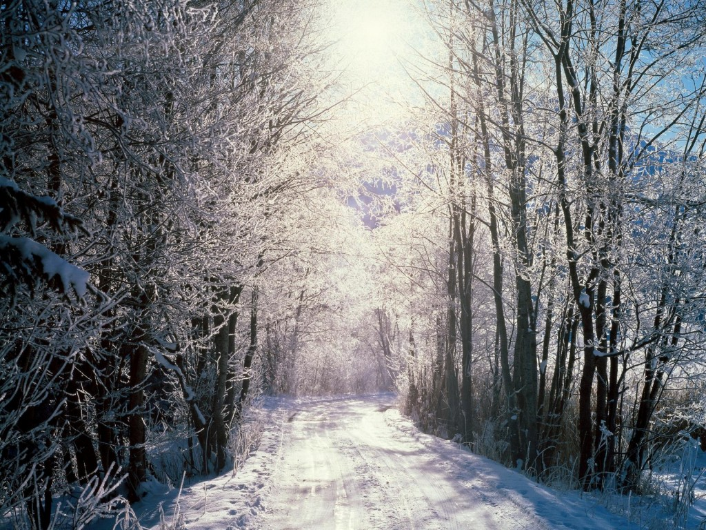 http://74211.com/photos-of-nature-landscape-snowy-woods-tall-trees-sunlight-pouring-on-them/ Photo by Anthony Michael